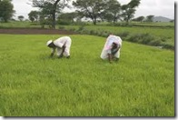agricul. india02
