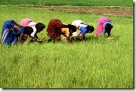 agricul. india