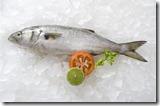anchova-no-litoral-brasileiro