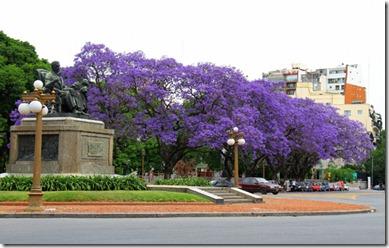新华社照片,布宜诺斯艾利斯,2011年11月20日  布市蓝楹盛开 街道变身花海  这是11月19日拍摄的阿根廷布宜诺斯艾利斯的街道。    每年11月,阿根廷首都布宜诺斯艾利斯迎来蓝楹盛开的季节,美丽的紫色花朵令城市街道变身花海。    新华社记者宋洁云摄