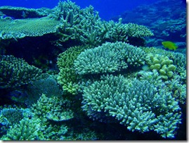 Chishi-Coral-Reef-Kerama-Islands