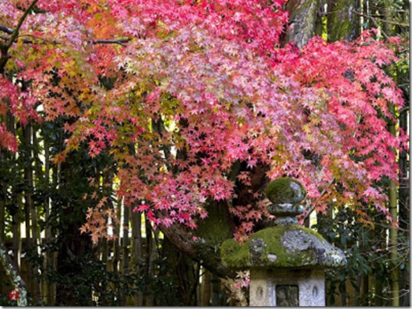 Autumn-leaves_daitokuji_kyoto_01