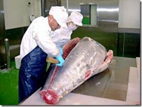 Empresas de alimentos marinhos estão oferecendo produtos semipreparados