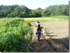 Caminhada em pântano em Yatsu, província de Chiba