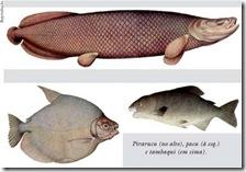 peixes da amazonia