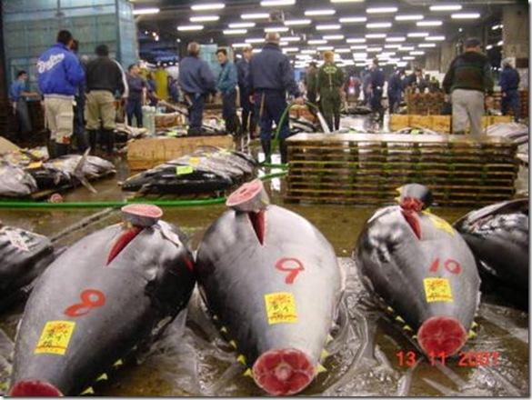 Tsukiji_Fish_