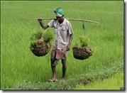 agricul. india01