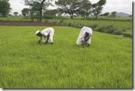 agricul. india02