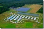 14444801-air-view-of-modern-hog-farm-and-lagoons