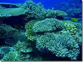 Chishi-Coral-Reef-Kerama-Islands
