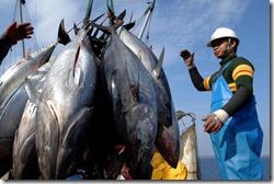 030410-Bluefin-tuna-ban_full_600